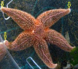 cf3ebf5f01f9099b14f0fda114cce511--starfish-kennedy